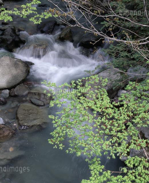 新緑と流れの写真素材 [FYI04136579]