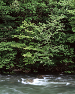 新緑と流れの写真素材 [FYI04136589]