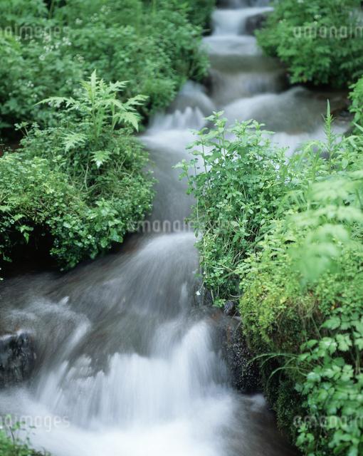 新緑と流れの写真素材 [FYI04136620]