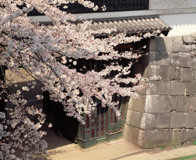 桜と清水門の写真素材 [FYI04136626]