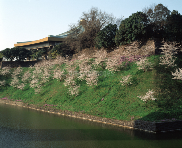 お濠と桜の写真素材 [FYI04136630]