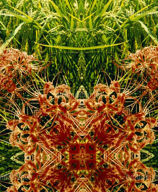 万華鏡(kaleidoscope)の写真素材 [FYI04136661]