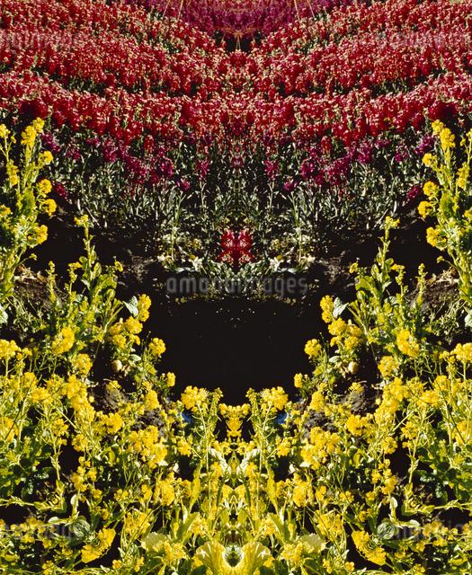 万華鏡(kaleidoscope)の写真素材 [FYI04136664]