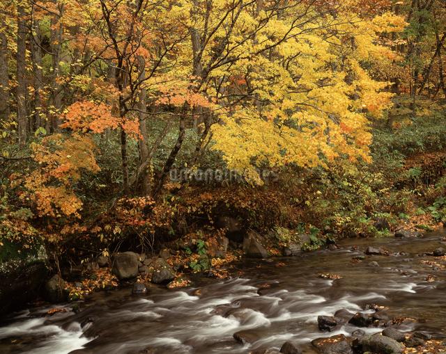 秋のせせらぎの写真素材 [FYI04136710]