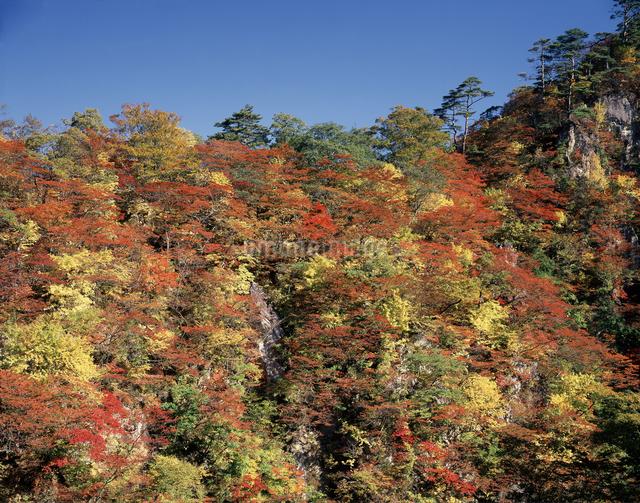 紅葉の鳴子峡の写真素材 [FYI04136742]