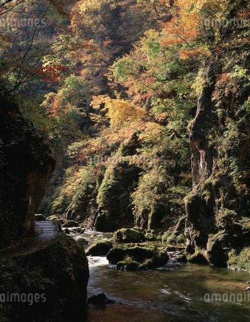 紅葉の鳴子峡の写真素材 [FYI04136745]