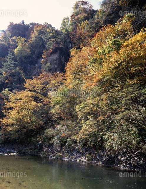 紅葉の鳴子峡の写真素材 [FYI04136749]