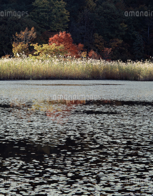 秋の沼の写真素材 [FYI04136767]