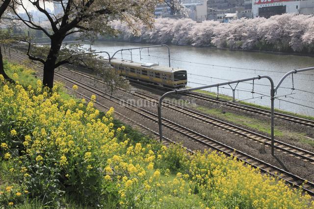 菜の花とJR総武線電車の写真素材 [FYI04136812]