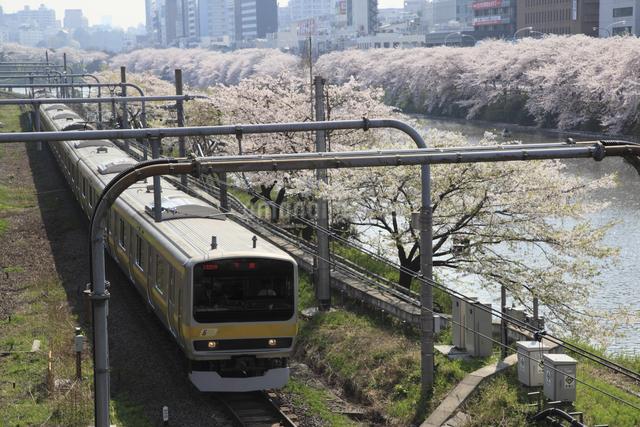 桜とJR総武線電車の写真素材 [FYI04136814]