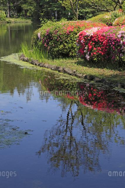 池とツツジの写真素材 [FYI04136833]