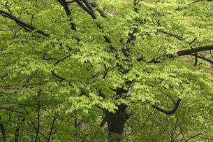 新緑の写真素材 [FYI04136852]