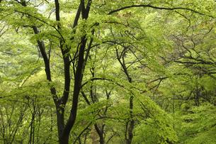 新緑の写真素材 [FYI04136853]