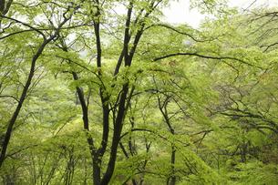 新緑の写真素材 [FYI04136854]