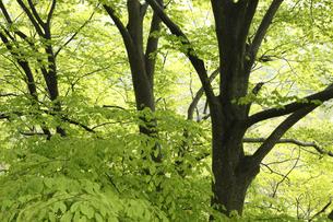 新緑の写真素材 [FYI04136855]