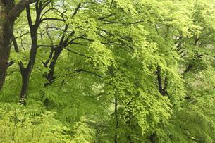 新緑の写真素材 [FYI04136856]