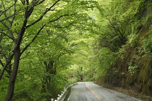 新緑のトンネルの写真素材 [FYI04136860]