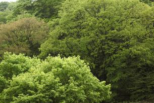 新緑の写真素材 [FYI04136861]