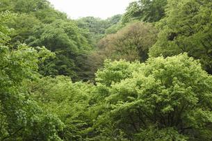 新緑の写真素材 [FYI04136862]