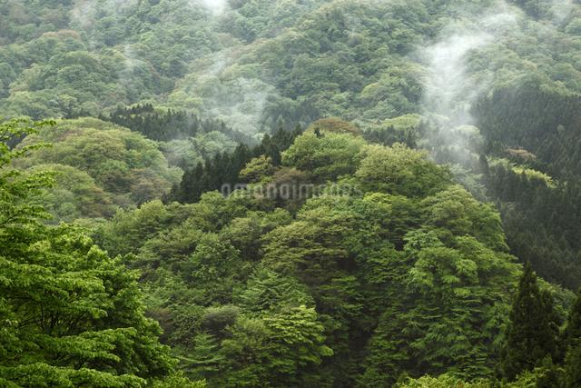 新緑の山肌の写真素材 [FYI04136864]