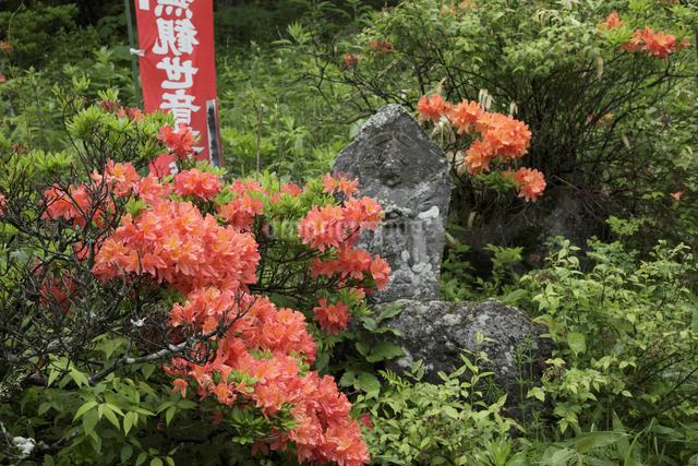 地蔵峠のお地蔵様の写真素材 [FYI04136913]