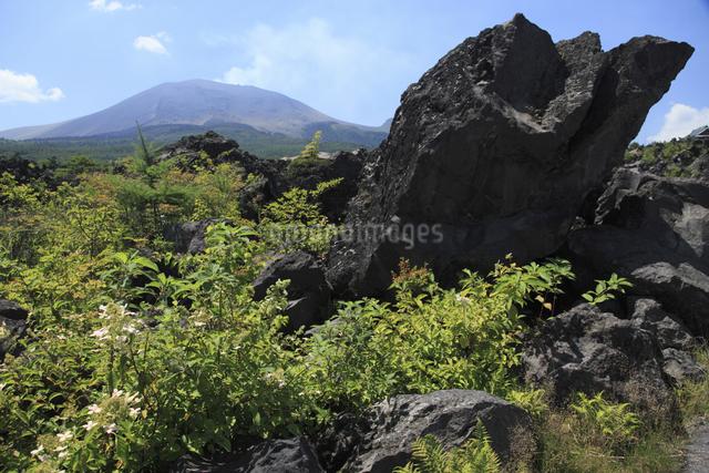 鬼押出しの溶岩と浅間山の写真素材 [FYI04136925]