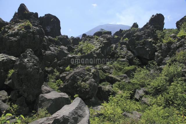 鬼押出しの溶岩と浅間山の写真素材 [FYI04136929]
