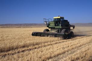 小麦畑の写真素材 [FYI04136969]