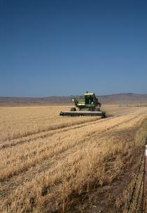 小麦畑の写真素材 [FYI04136970]