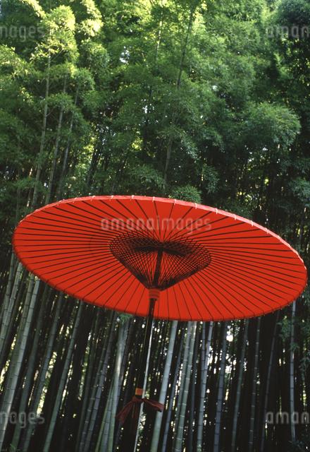 赤い傘 報国寺竹林の写真素材 [FYI04137003]