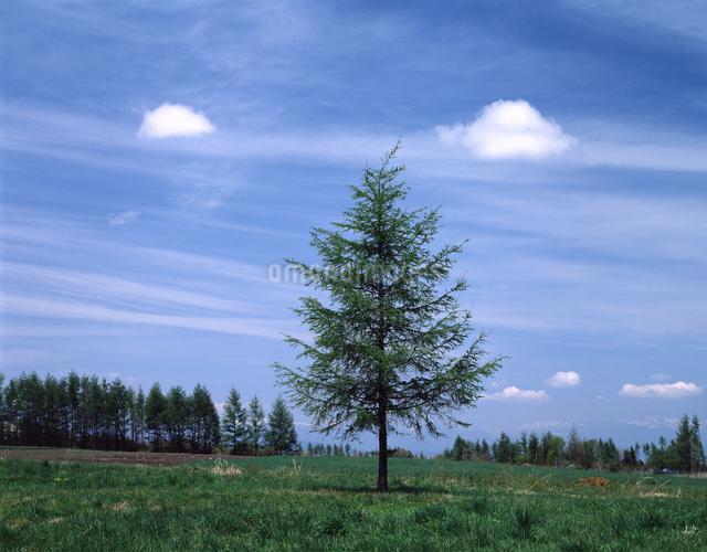一本の木の写真素材 [FYI04137026]
