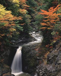 秋の大滝 高野山の写真素材 [FYI04137150]