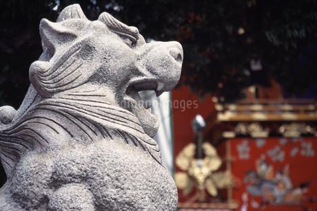 狛犬の写真素材 [FYI04137217]