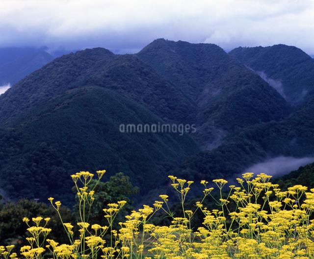 熊野の山並の写真素材 [FYI04137235]