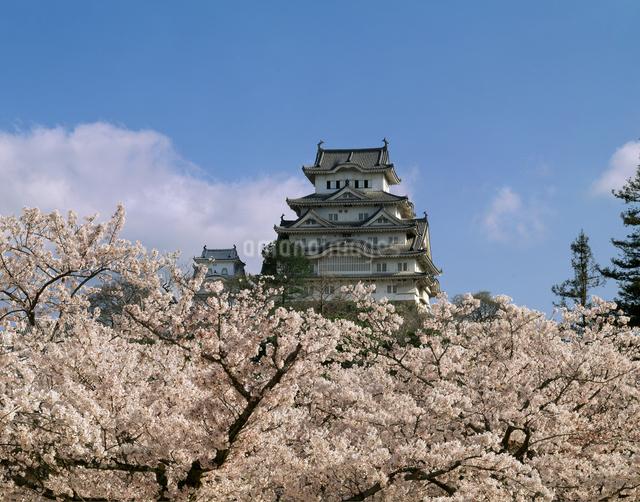 春の姫路城(国宝・世界遺産)の写真素材 [FYI04137246]
