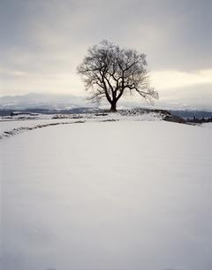 一本の木(桜)  冬 雪の田の写真素材 [FYI04137268]