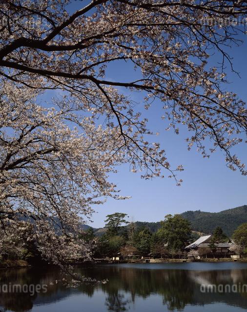 大沢池の春の写真素材 [FYI04137311]