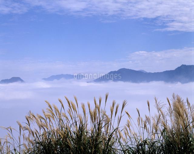 雲海とススキ 石随山の写真素材 [FYI04137321]