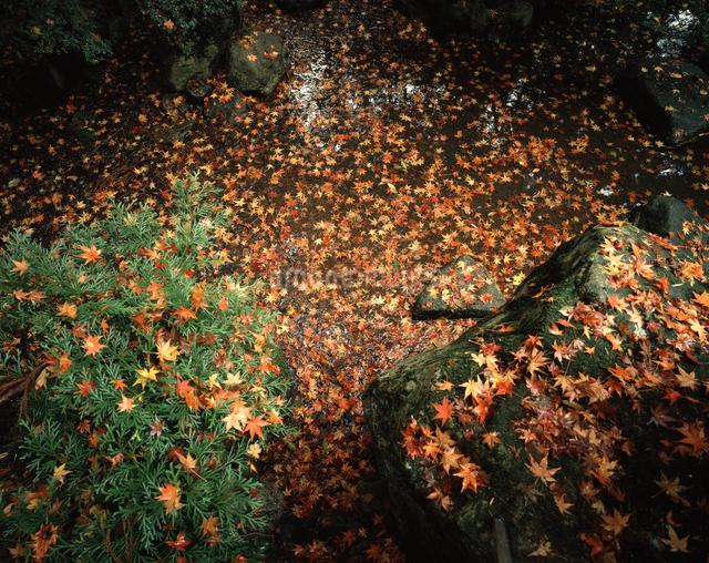 紅葉散る池の写真素材 [FYI04137325]