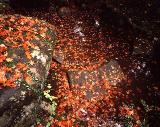 紅葉散る池の写真素材 [FYI04137334]