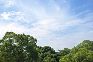 公園と青空の写真素材 [FYI04137691]