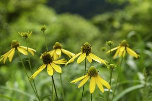 花の写真素材 [FYI04140932]