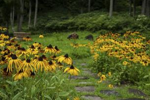 黄色い花の写真素材 [FYI04140936]