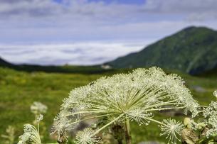 山の花の写真素材 [FYI04140937]