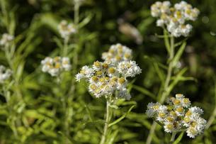 花の写真素材 [FYI04140940]