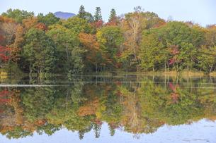福島県 観音沼森林公園の写真素材 [FYI04141545]