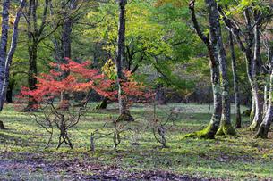 福島県 観音沼森林公園の写真素材 [FYI04141577]