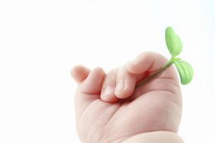 双葉と赤ちゃんの手の写真素材 [FYI04143351]