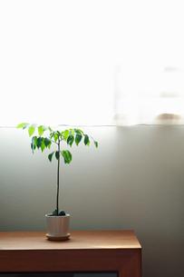 部屋の中の観葉植物の写真素材 [FYI04145208]