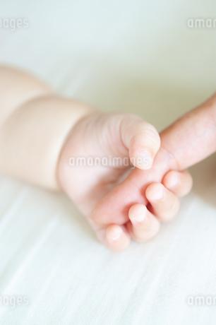 大人の指を掴む赤ちゃんの手の写真素材 [FYI04145215]